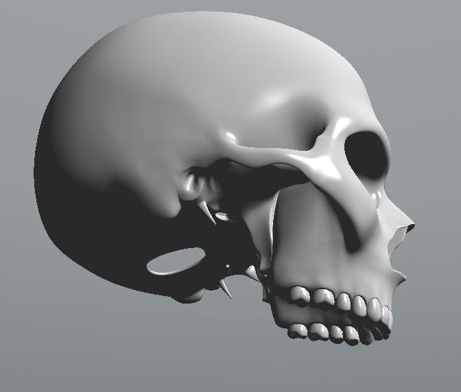 Skull17.JPG