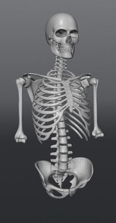 Skull170.JPG