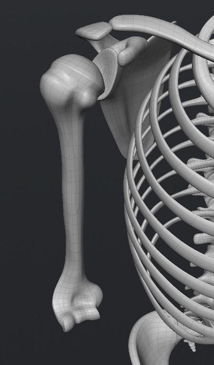 Skull173.JPG