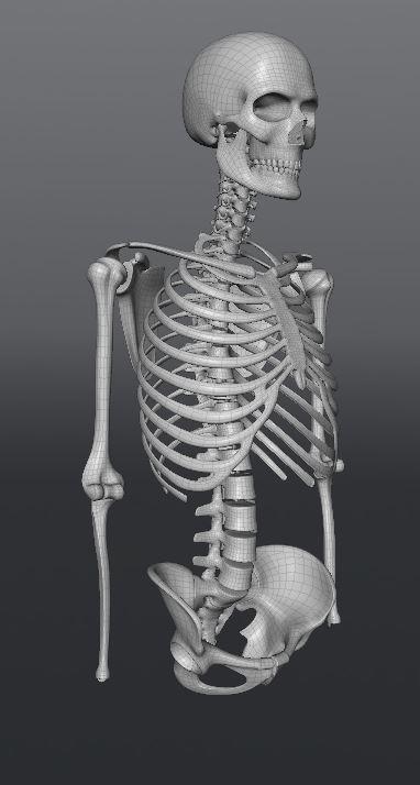 Skull180.JPG