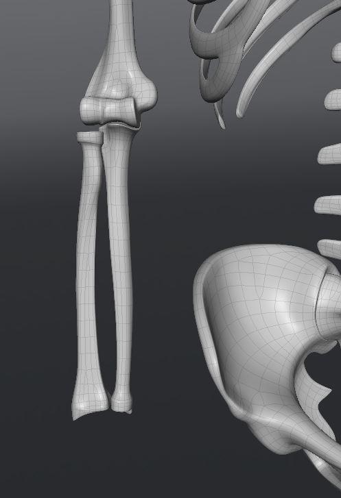 Skull181.JPG
