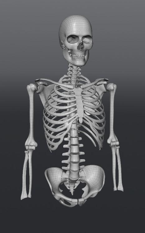 Skull185.JPG