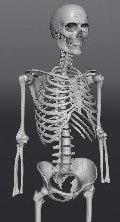 Skull186.JPG