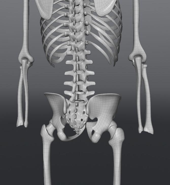 Skull187.JPG