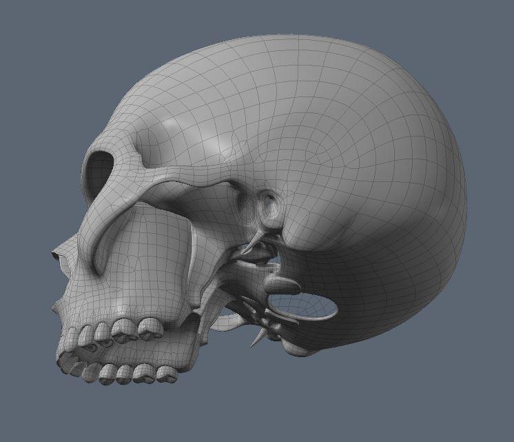 Skull19.JPG
