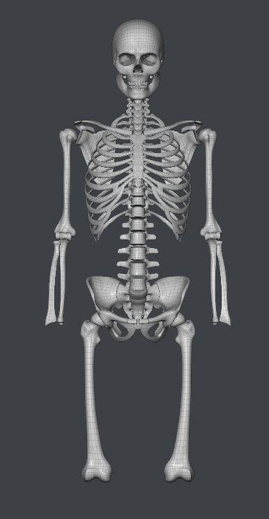 Skull191.JPG