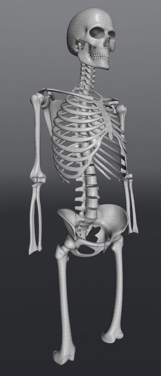 Skull199.JPG