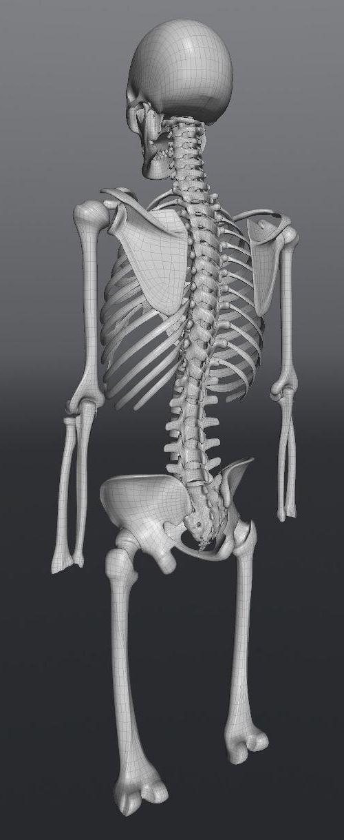Skull200.JPG