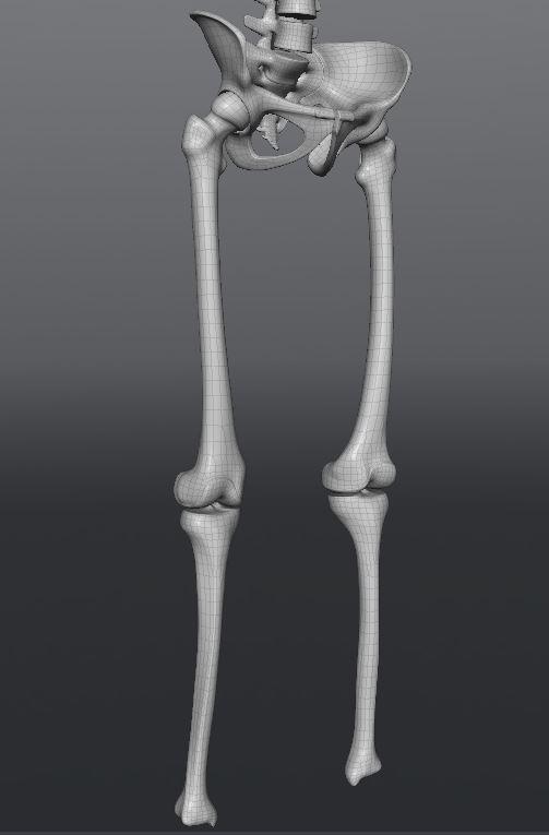 Skull202.JPG