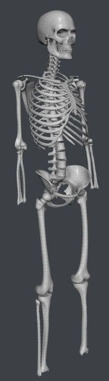 Skull211.JPG