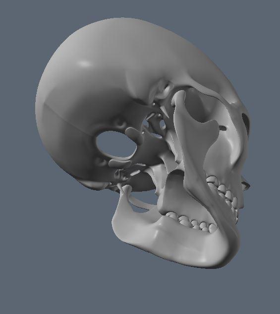 Skull27.JPG