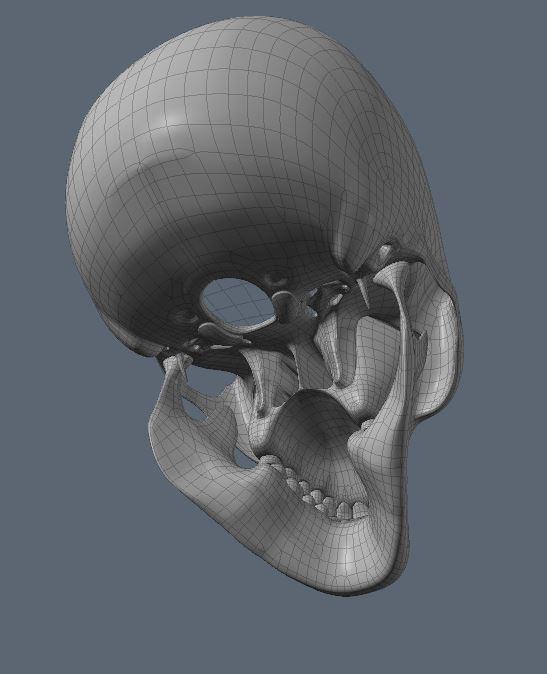 Skull28.JPG