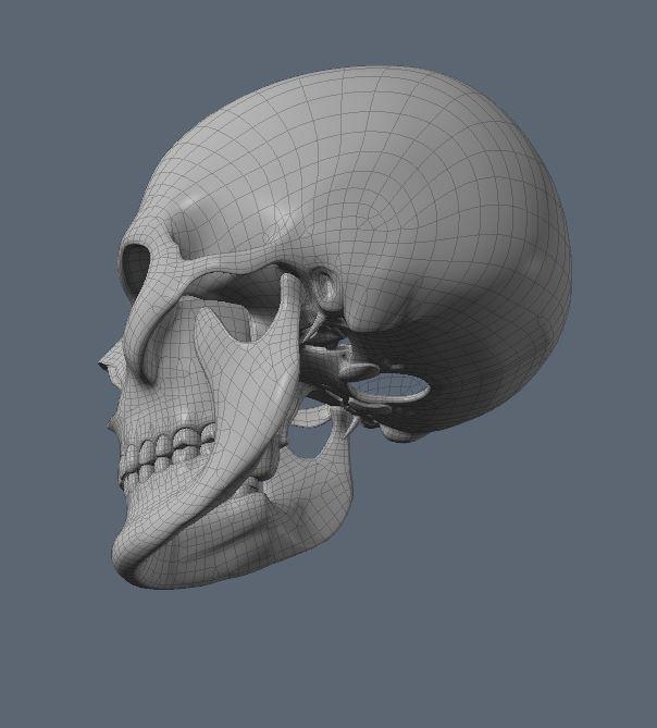 Skull30.JPG