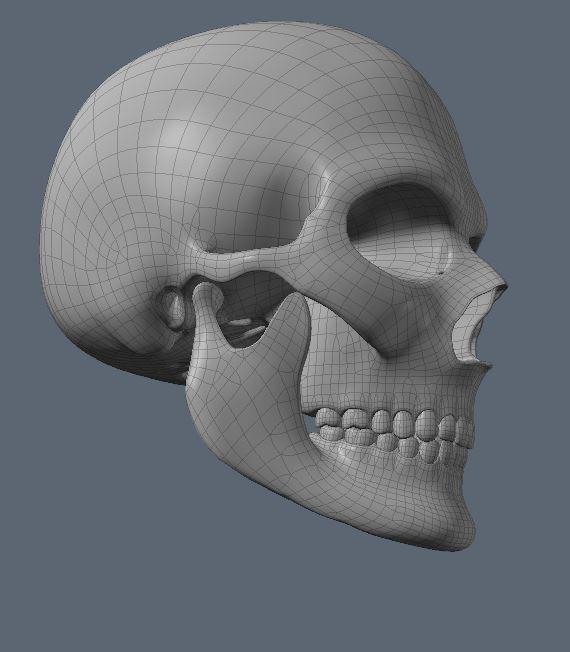 Skull38.JPG