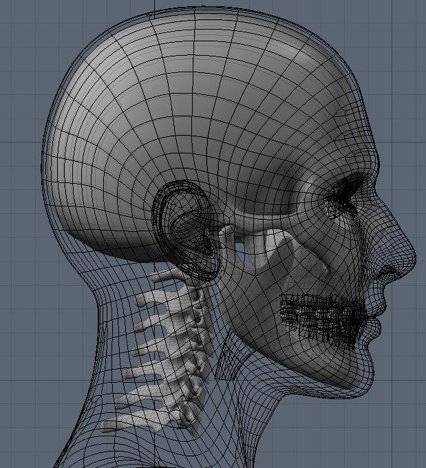Skull60.JPG