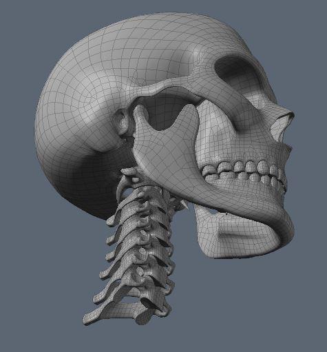 Skull63.JPG