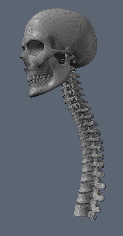 Skull75.JPG