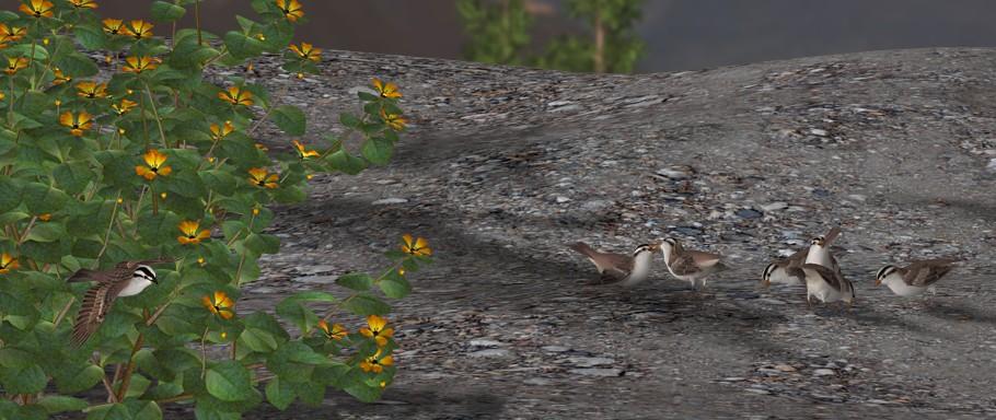 Sparrows.jpg