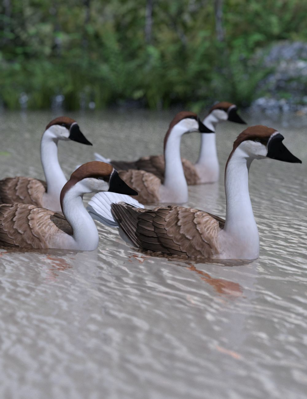 Swan Geese.jpg