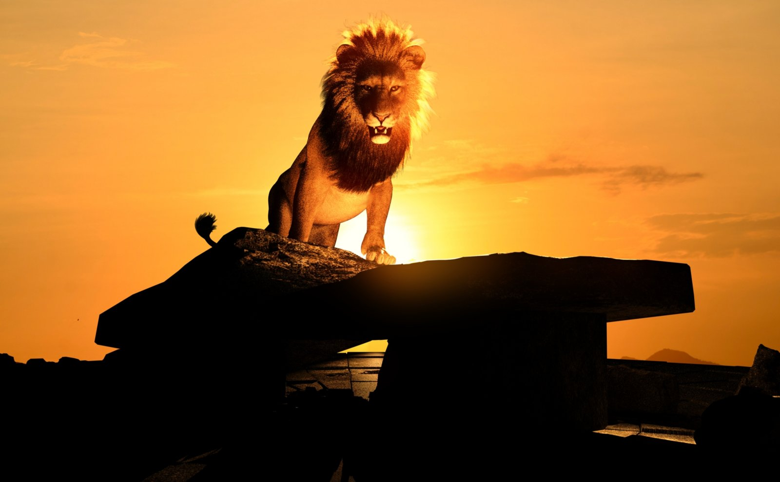 The lion wakes at dawn.jpg