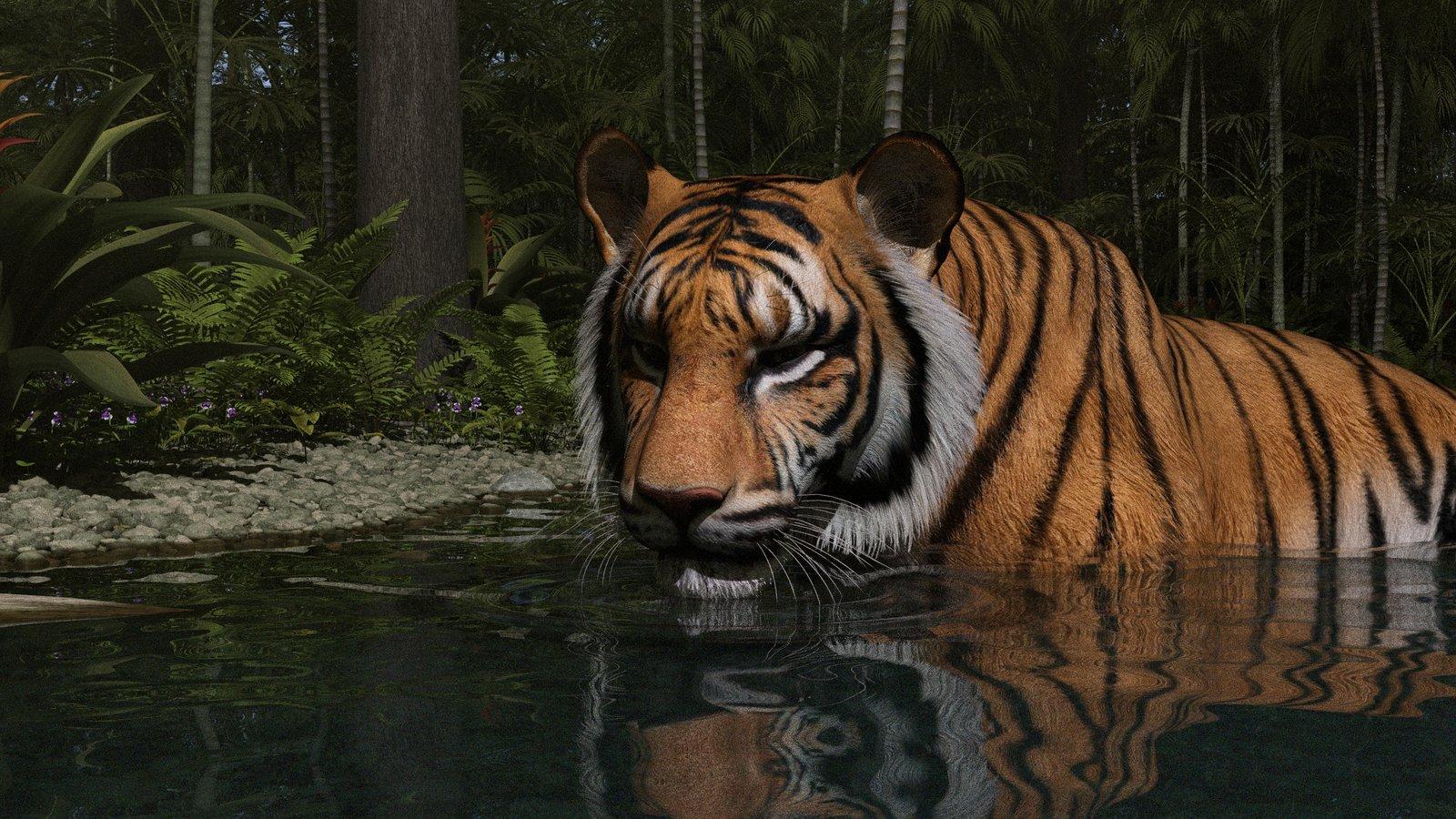 Tiger Cooling Off 02.jpg