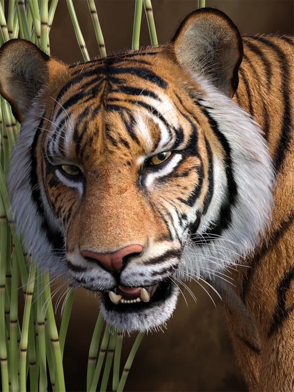 Tiger Eyes 101z.jpg