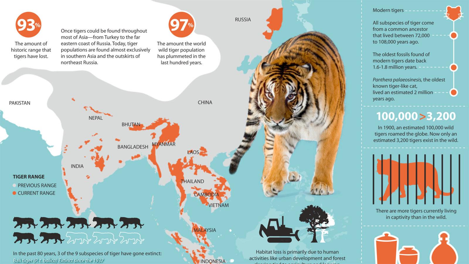 TigerInfographic2-Main.jpg