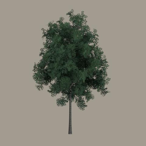 treeTest05.jpg