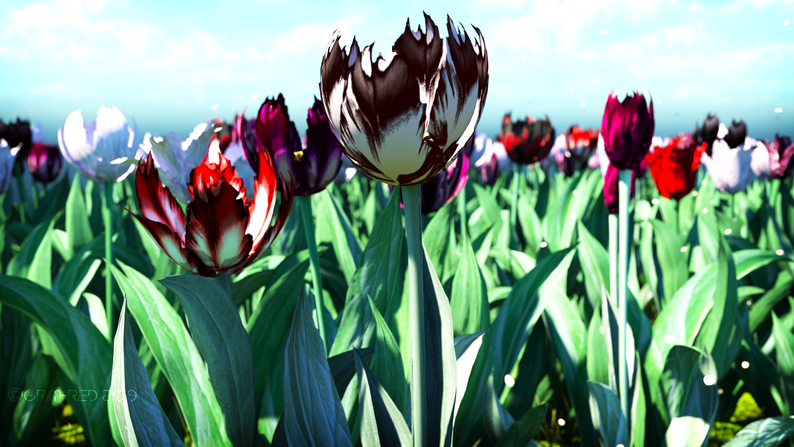 TulipPromoWideScreenMix.jpg
