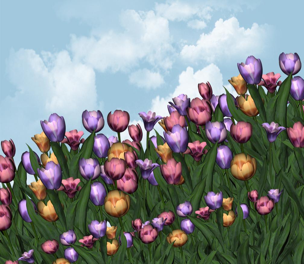 Tulips6 copy.jpg