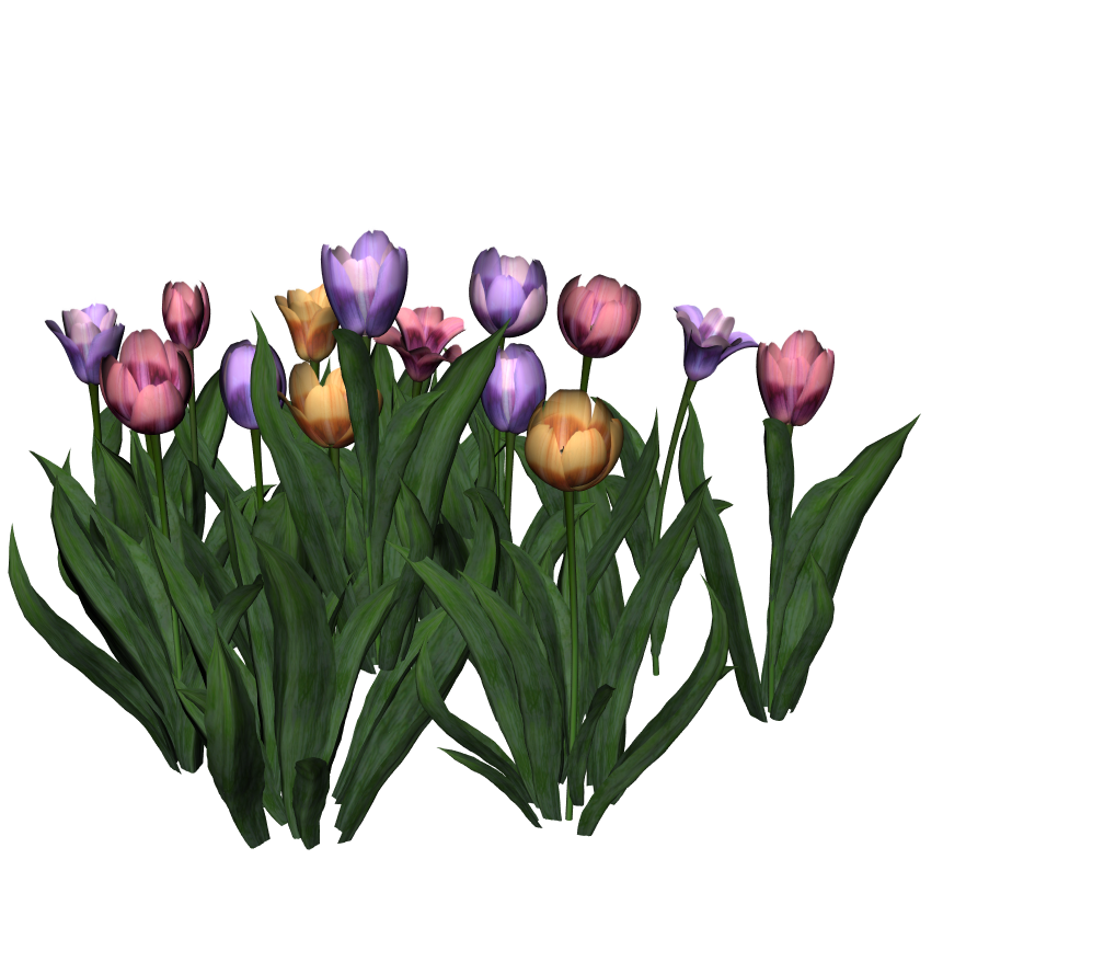 Tulips6.png