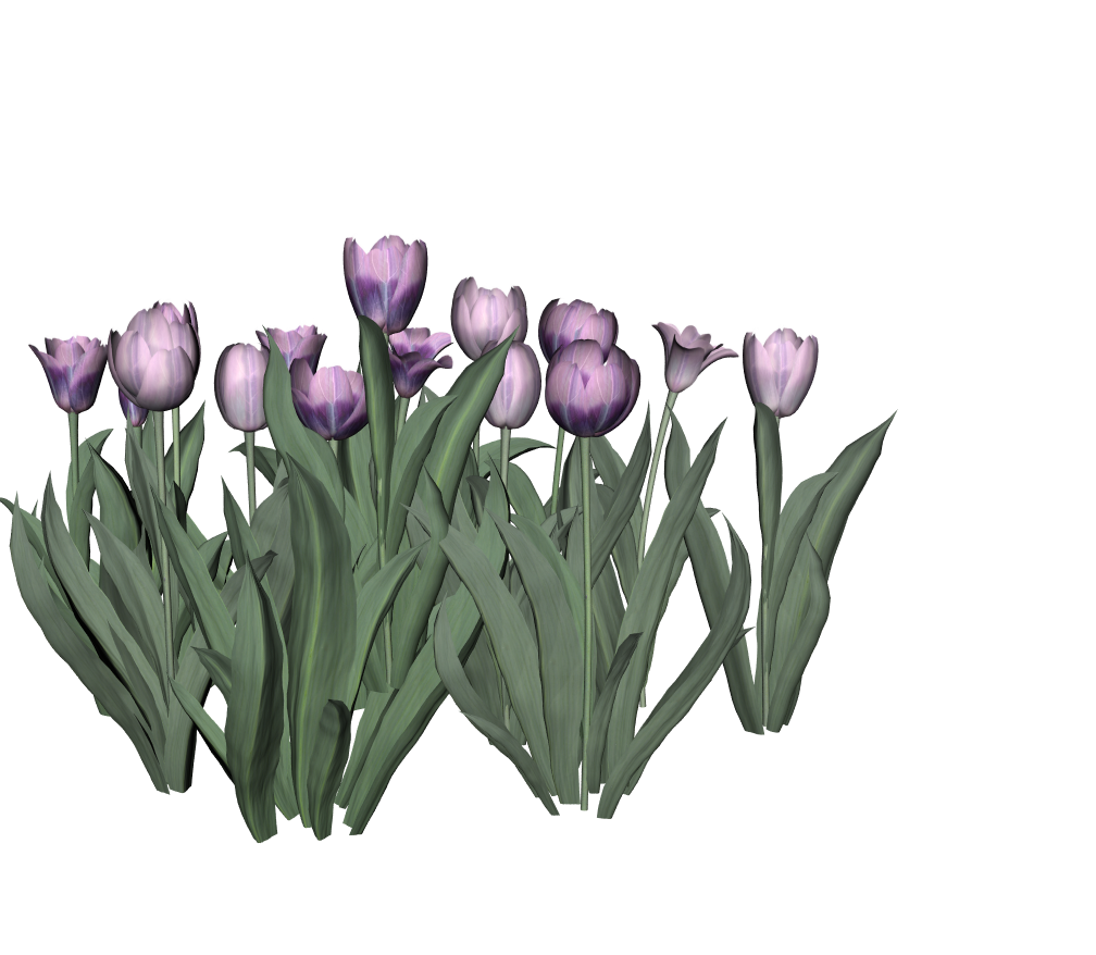 Tulips7.png
