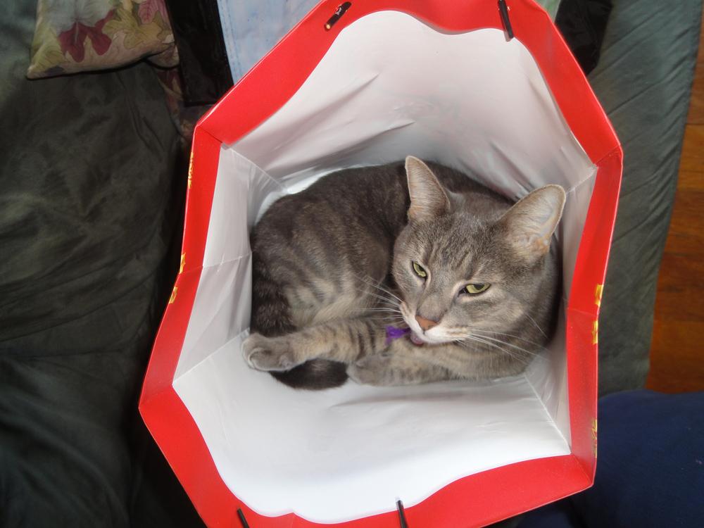 Vesper in a bag.jpg