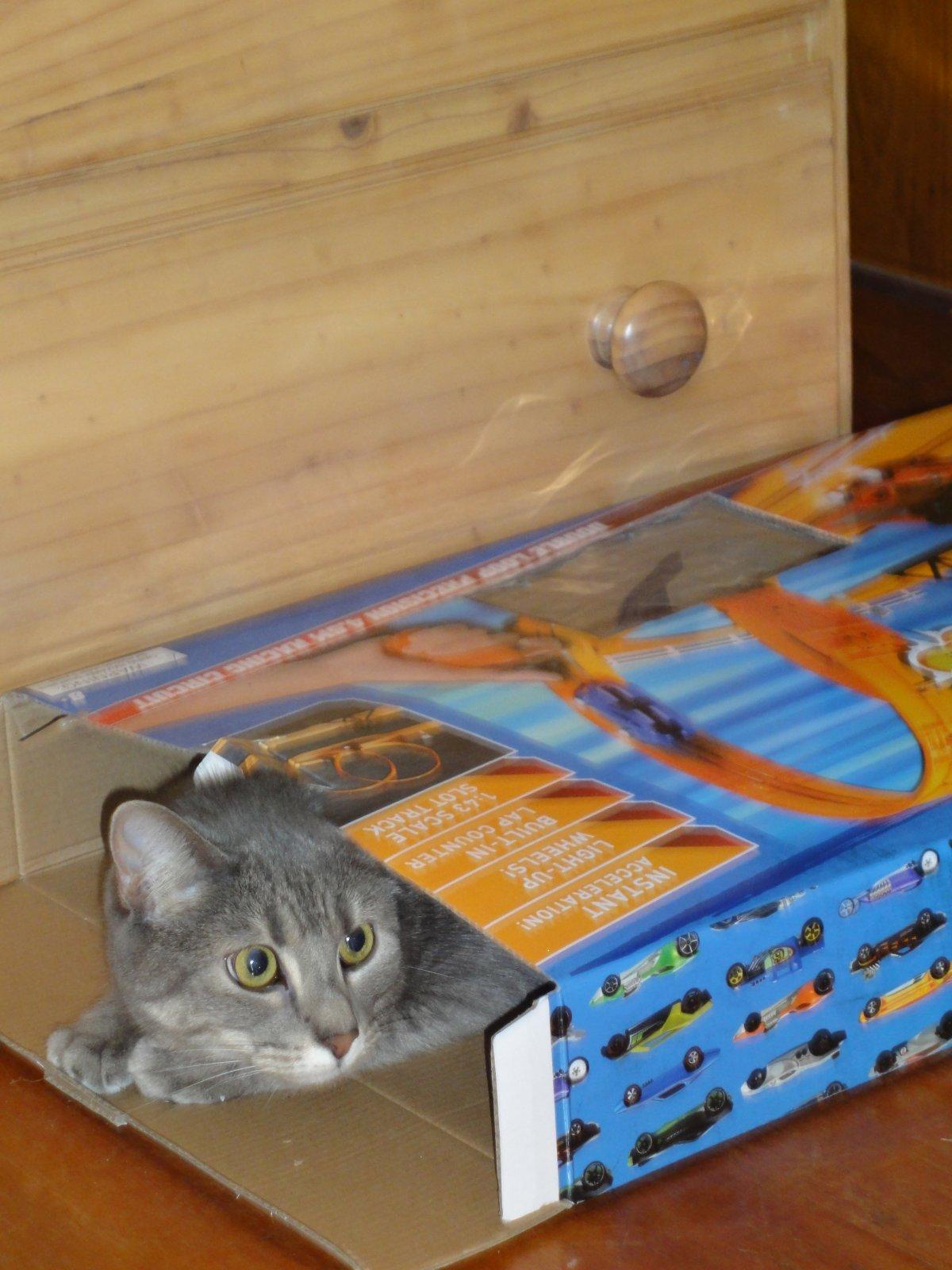 vesper in a box.jpg