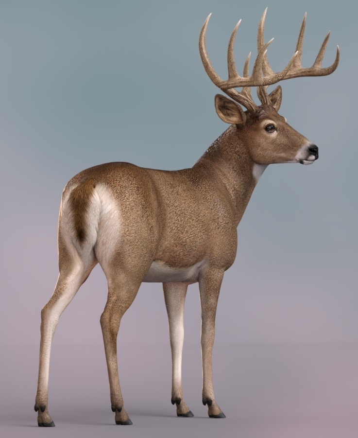 Whitetail_IR212a.jpg