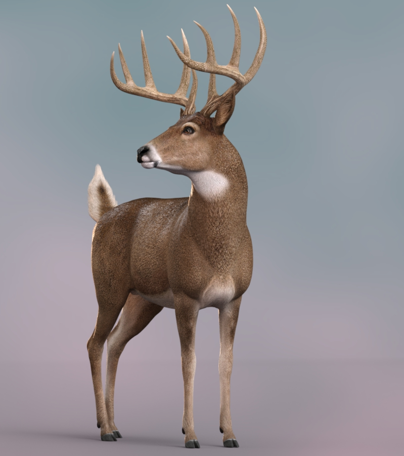 Whitetail_IR212d.jpg
