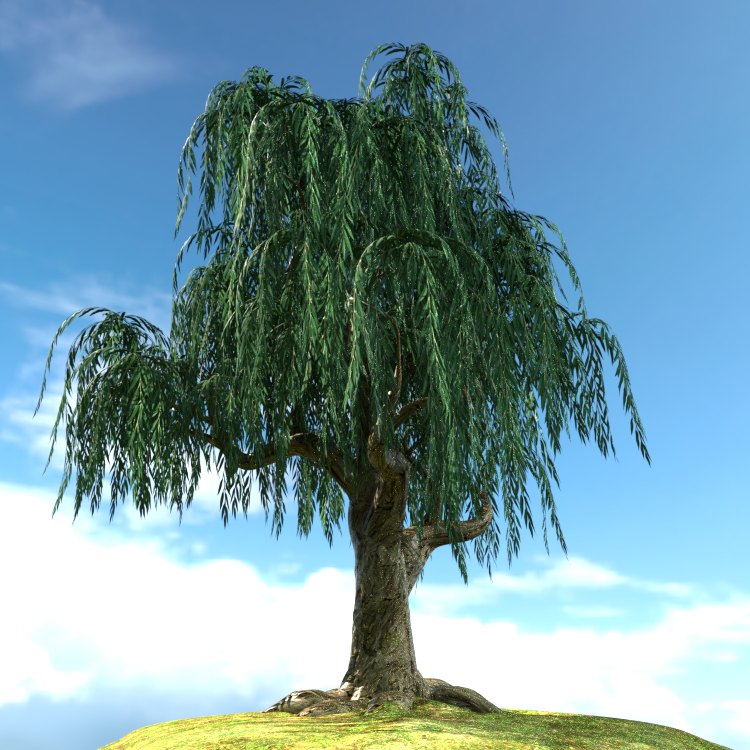 willow-1.jpg