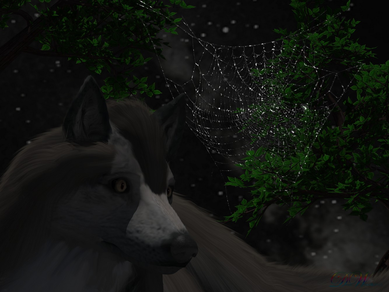 WolfWeb.jpg