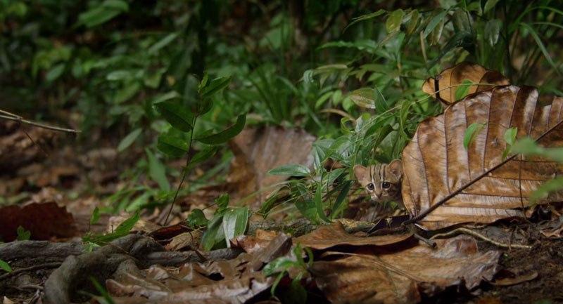 worlds-smallest-cat-11.jpg