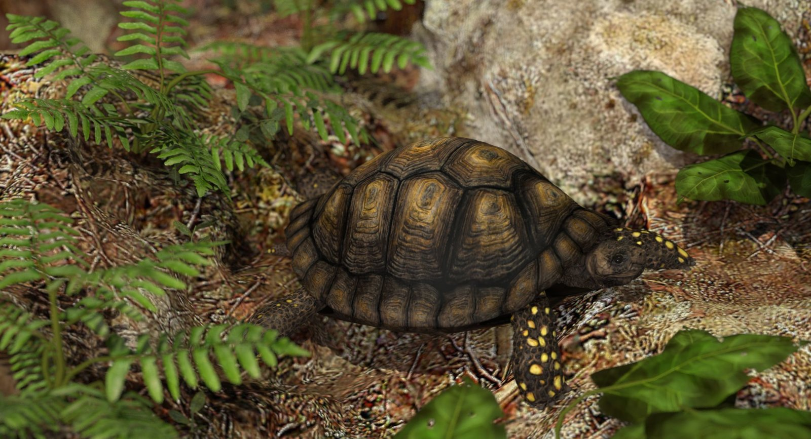 yellow-footed tortoise.jpg