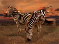 Artistic-Image-2.jpg