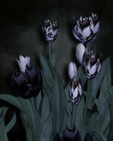 Dark and gothic copy.jpg
