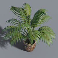 potted palm.jpg