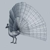 Peacock_h_06.jpg42e67f60-c62d-4840-8684-7eaa0a666313Large.jpg