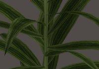 Leaves Default.jpg