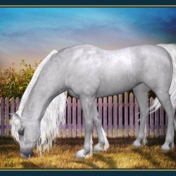The Arabian By Jeanne Harmon