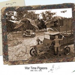 War Time Pigeons By Stezza