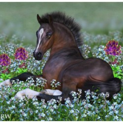 Foal And Flowers By CWRW