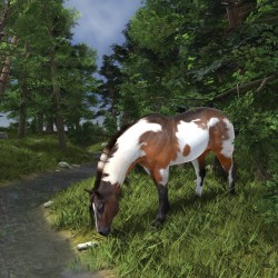 Paint Horse by the Forest Stream