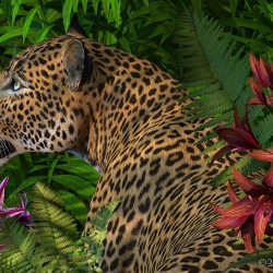 Leopards Gaze